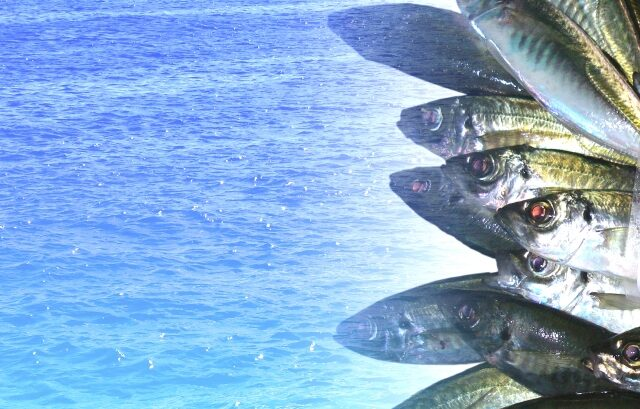 青魚の保護色
