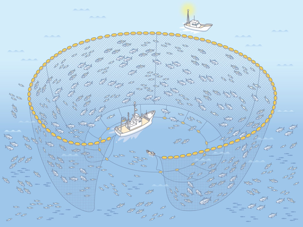 イメージ:巻き網漁