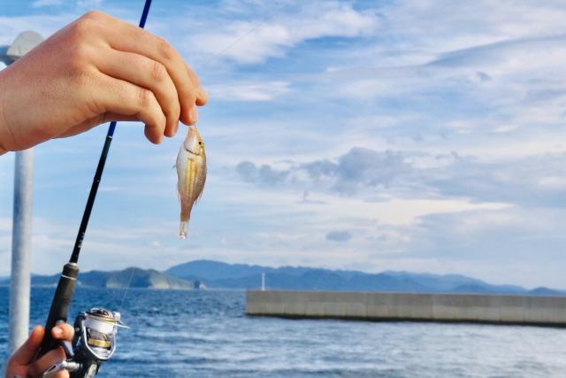 赤潮での釣り