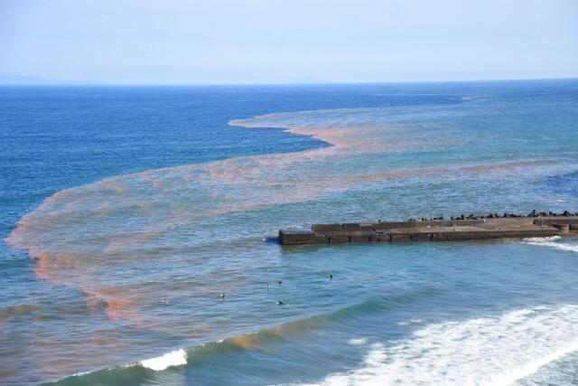 赤潮が発生した海