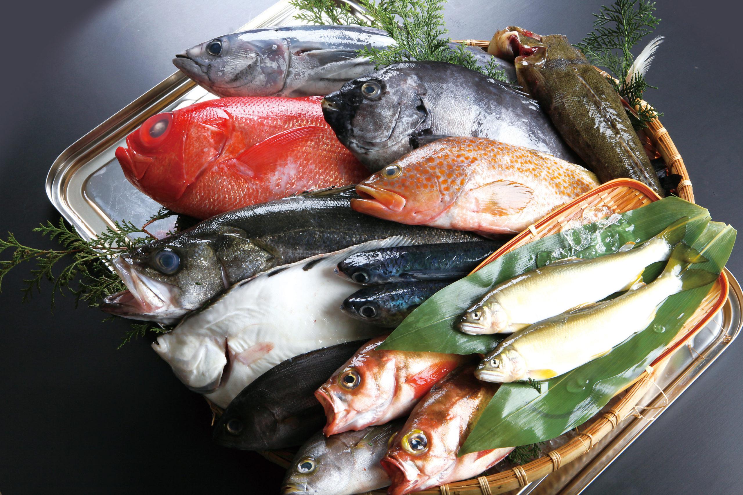 本・条・枚・杯で数えられる魚たち