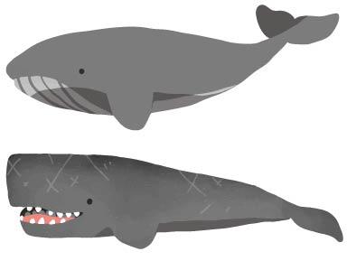 ヒゲクジラとハクジラ