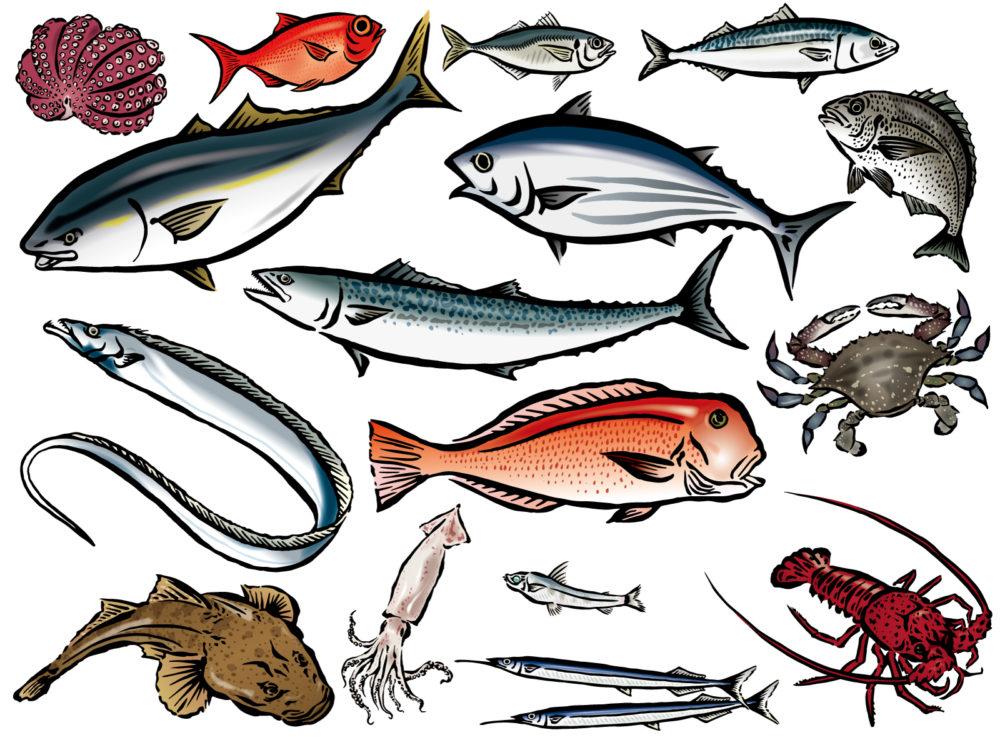 魚群イラスト