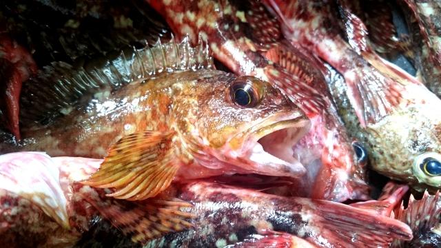未利用魚とは