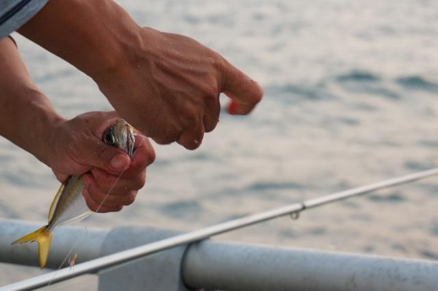 未利用魚の活用方法