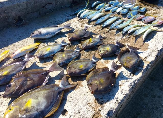 未利用魚-珍しい魚