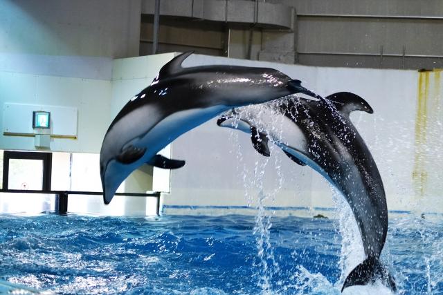 魚以外の生き物代表イルカ