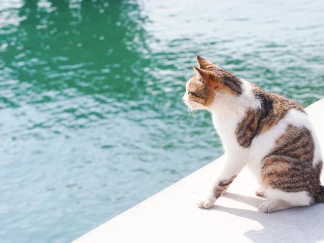 青魚がいる海を見つめる猫