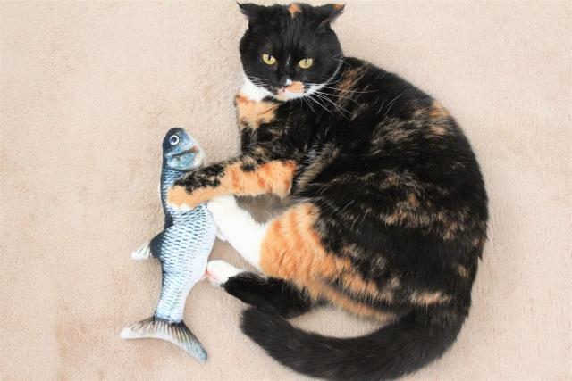 骨付きの魚と猫