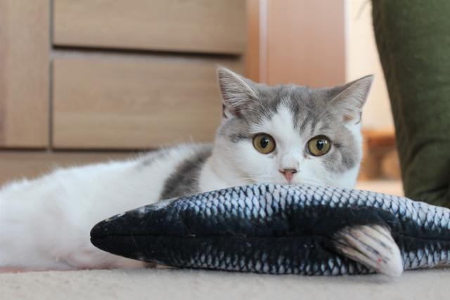 猫はマグロを食べても大丈夫
